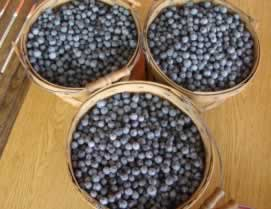 Fresh blueberries from Blueberry Hill Farms in Edom