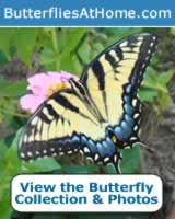 Butterflies at Home: species, identification tips, sizes, maps