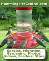 Hummingbird Central: Species, migration, gardening, photos, videos, feeders