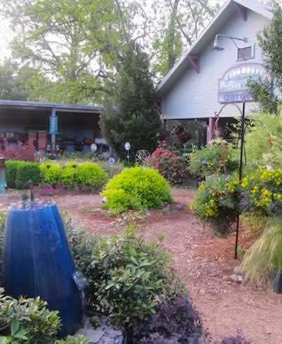 Blue Moon Gardens and nursery in Edom, Texas
