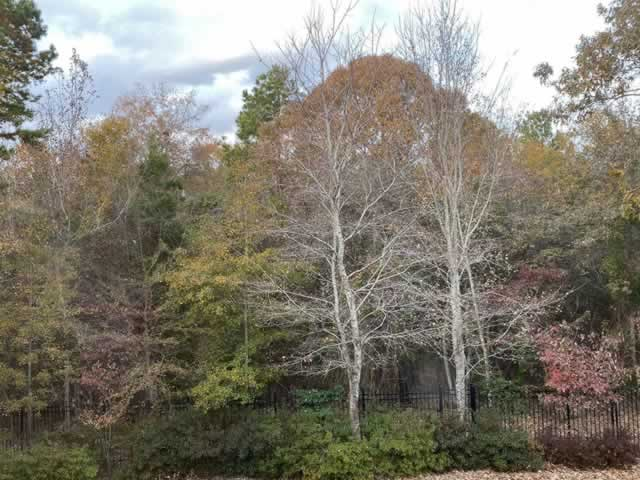 East Texas Fall Foliage Cam