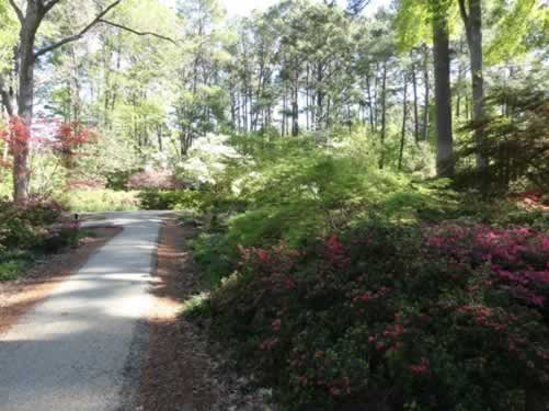 Ruby M. Mize Azalea Garden on the campus of SFA, Nacogdoches, Texas